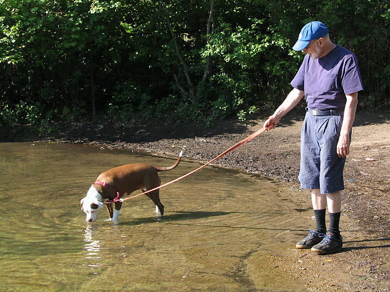 Dog and guy 6-02