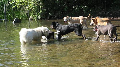Dog beach 3 6-02