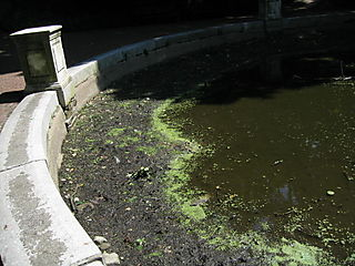 Vale dried pool