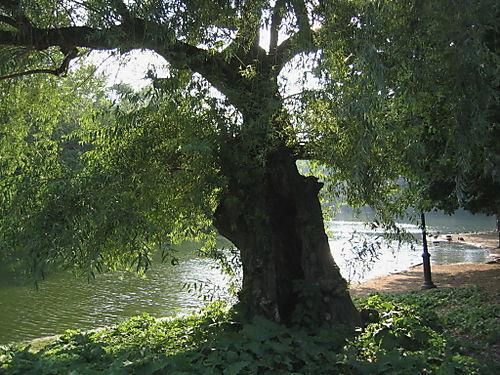Tree of life 6-26