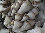 Mushrooms2 6-28
