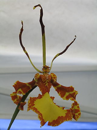Orchid1 6-28