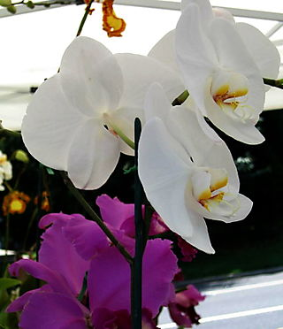 Orchid2 6-28