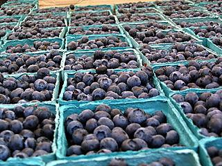 Blueberries 6-28