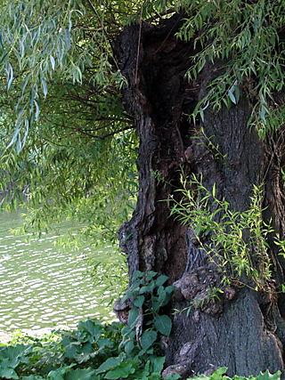 Tree of life cu 6-26