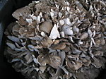 Mushrooms 1 6-28