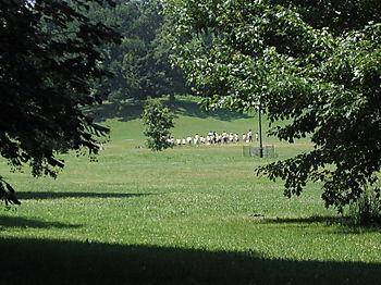 Long meadow marchers 7-1