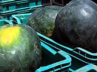 Watermelon 2 7-26
