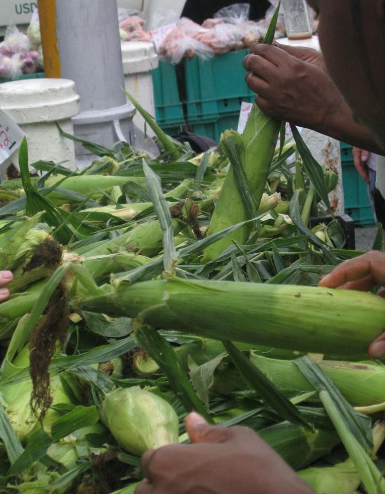 Cornpicking 8-02