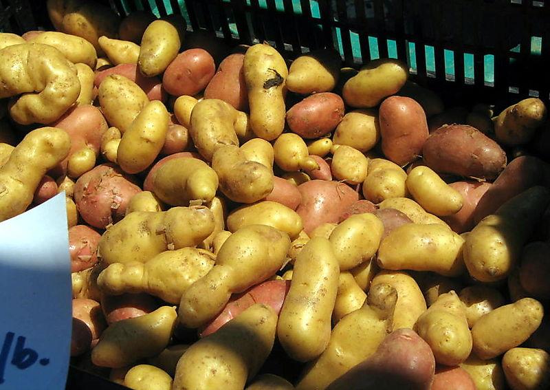 Little potatoes 7-26