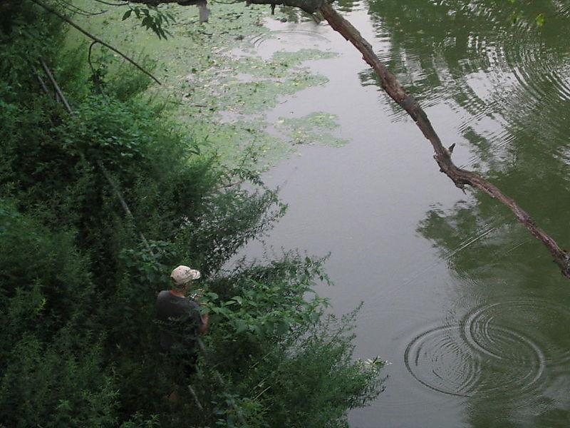 Fishing, Terrace Bridge 2 7-28