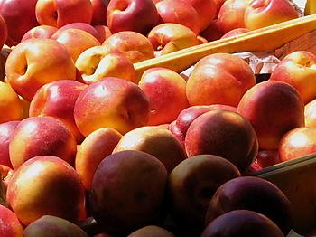 Nectarines 8-09