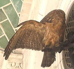 Taxidermy bird 9-04