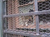 Wellhouse window 2 9-09