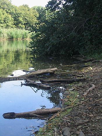 Cleanup lake edge 9-20