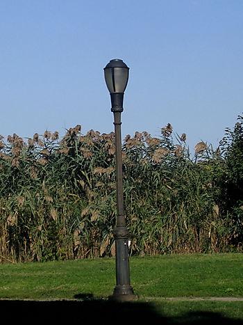 Phragmites lamppost 9-23