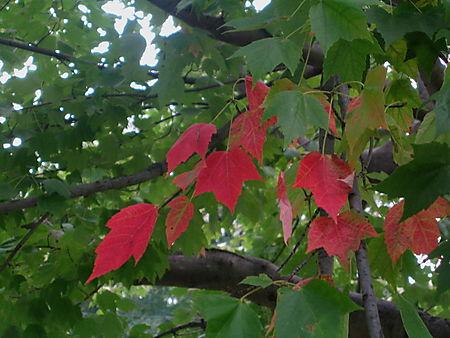 Foliage1 9-24