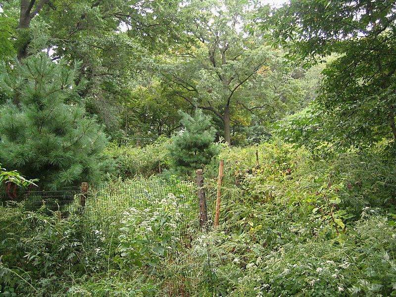 Lookout hill meadow 9-30
