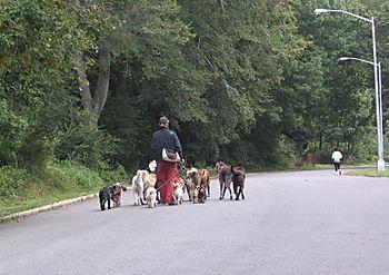 Dog walker 9-30