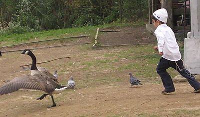 Boy meets goose 10-01