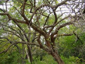 Wellhouse Drive tree 10-22