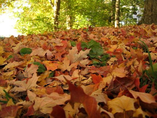 Leafy carpet 10-24