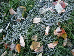 Frost leaves 10-24