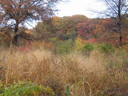 Autumn impressionist 11-06