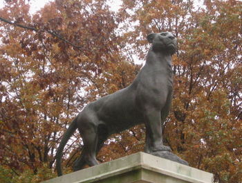 Panther cu 11-07