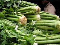 Veg celery 11-15