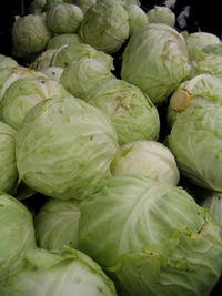 Veg cabbage 11-15