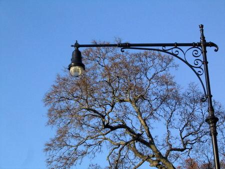 Bare tree&lamppost 11-19