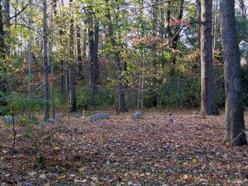 Quaker cemetery 11-19