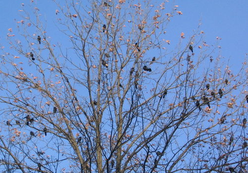 Grackletree 11-23