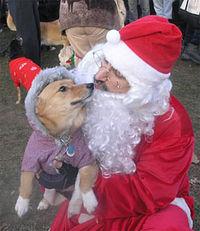 Dog&santa