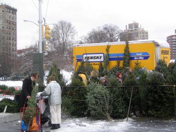 Greenmarket Christmas trees 12-20