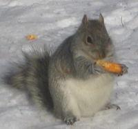 Squirreldoodles cu 12-23