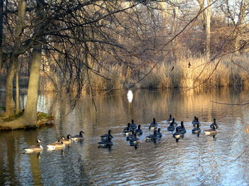 Goose fleet 12-29