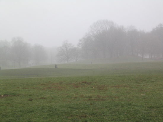 Long Meadow in mist 12-27