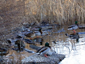 Duck camo 12-28