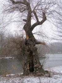 Magic tree 12-31
