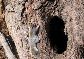 Squirrel hole 1-4