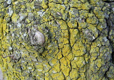 January moss 1-12