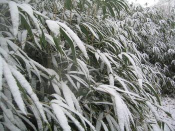 Vale bamboo cu 1-15