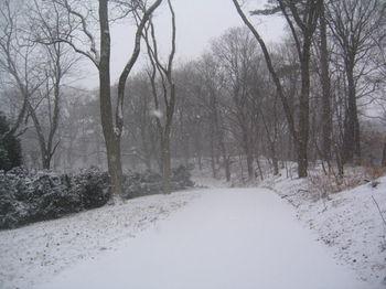 Virgin snow path 1-15