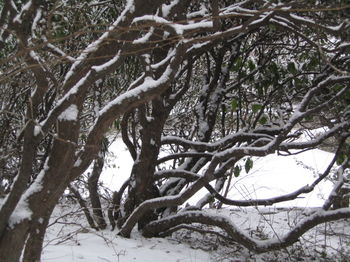 Vale branches snow 1-15