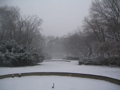 Rose garden in snow 1-15