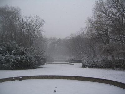 Rose garden in snow 1-15