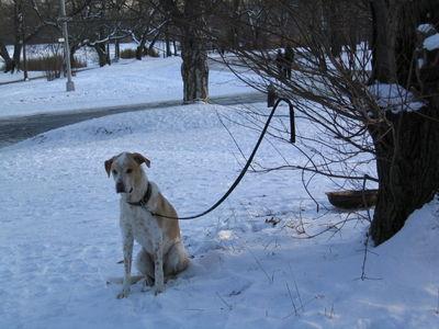 Snowdog waiting 1-20
