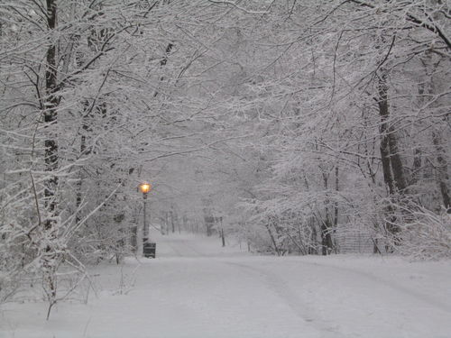 Snowpath 2-03